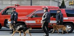 1 bomb sniffing dogs Boston marathon