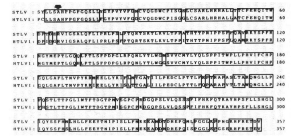 HTLV 1 aminoacid seq SIV