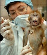 monkey suffering for science or profit