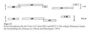 Montagnier genome comparison HTLVI and HIV 1984