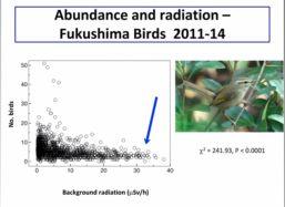 birds abundance 2014