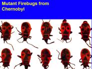 mutant firebugs