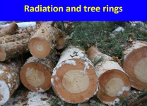 tree rings radiation mark