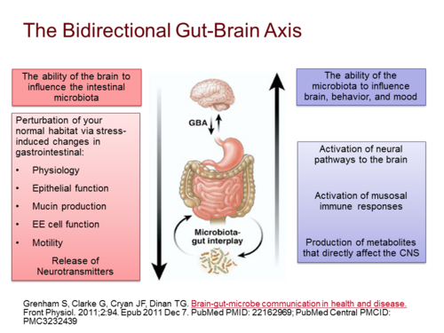 Brain-Gut crosstalk 2