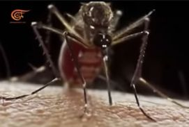mosquito B-weapon 1
