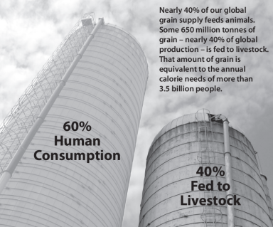 Grain for animals