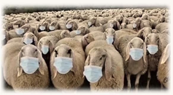Sheep & PEEP