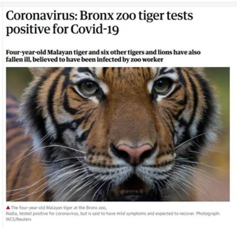 Tiger pos CoV Test Guardian